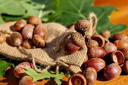 depth of field of hazelnuts
