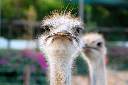shallow focus photography of ostrich
