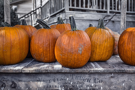 selective color of pumpkin photo