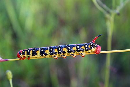yellow and black caterpillar photo