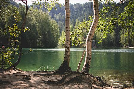 Lakeside Nature in Czech Republic