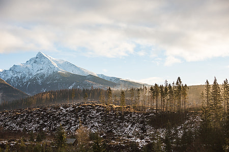 Big Mountain and Morning Woods Scenery