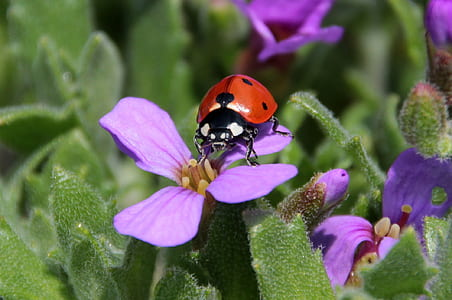 ladybug perched on purple petaled flower closeup photography