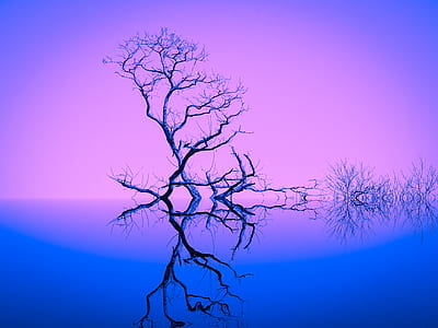 bare tree reflecting on body of water