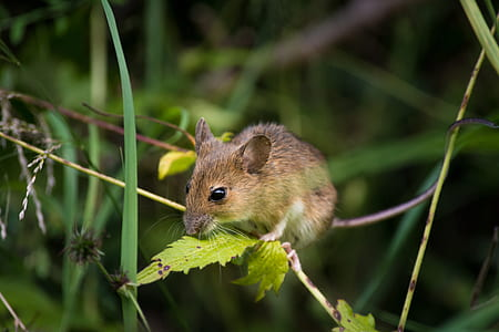 wildlife photography of rodent on green leaf