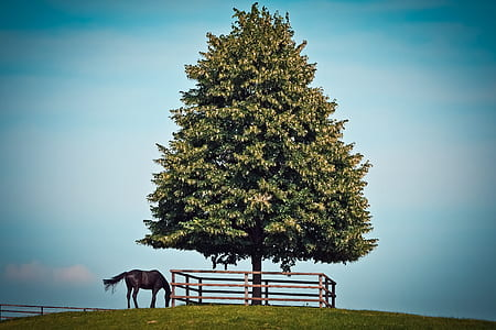 brown horse near green tree foliage
