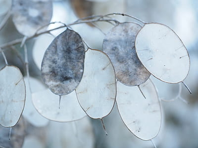 macro lens photography of white and gray leaves