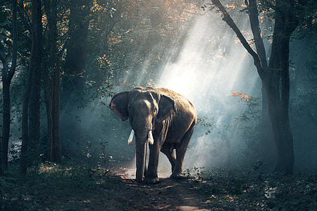 Elephants in Thailand forest
