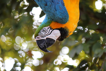 closeup photo of yellow-blue macaw