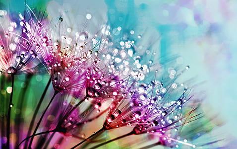 purple silk flowers with dewdrops photogarphy