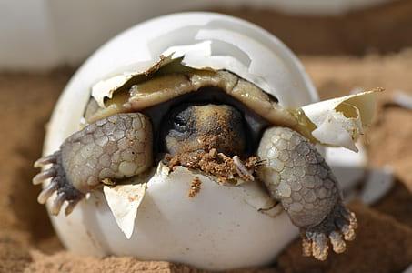 baby turtle inside egg