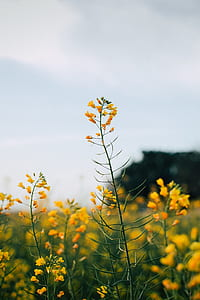 focused photo of yellow and green flower