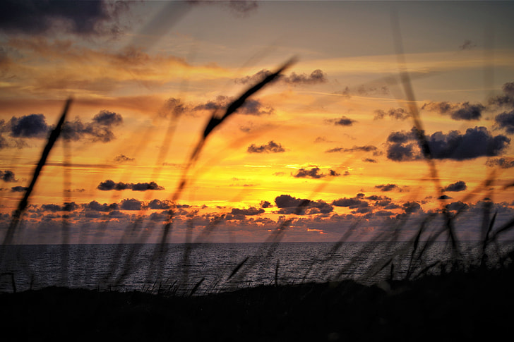 Grass on the coast and beach during summer sunset