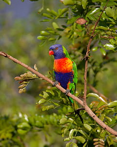 red, green, and purple bird perching on tree branch during daytime