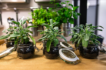 Green plants in glass jars on a table