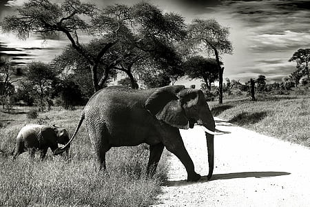 Elephant Mother and Child Black and White Photography
