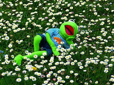 frog plush toy lying in white flowers