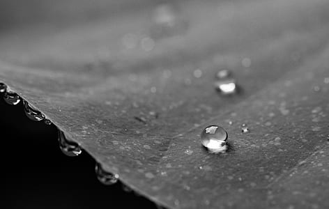 Grayscale Photography of Water Droplets