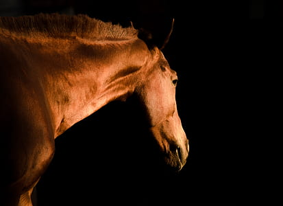 focus photography of brown horse