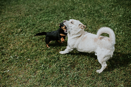 Dogs playing outside