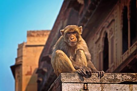selective focus photo of primate
