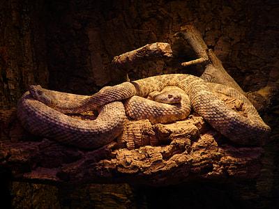 gray and white snake
