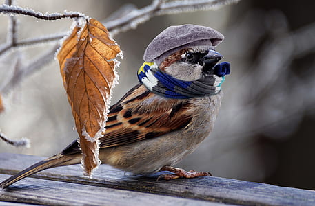 brown bird with hat and scarf
