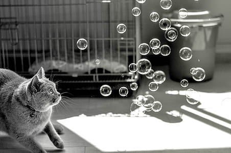 grayscale shot of cat staring at bubbles near cage