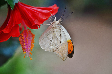 closeup photo of butterfly