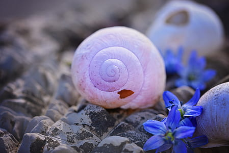 selective focus pink snail beside purple flowers