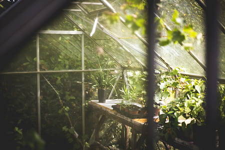 selective focus photography of plants inside greenhouse