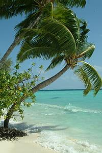 photo of coconut trees near seashore