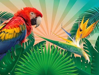 Scarlet Macaw illustration