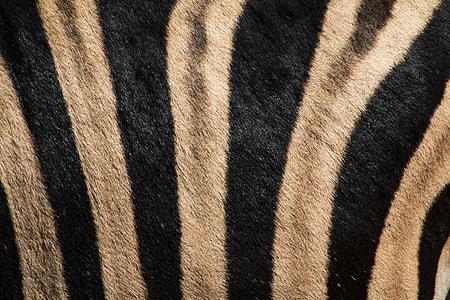 white and black stripe cloth