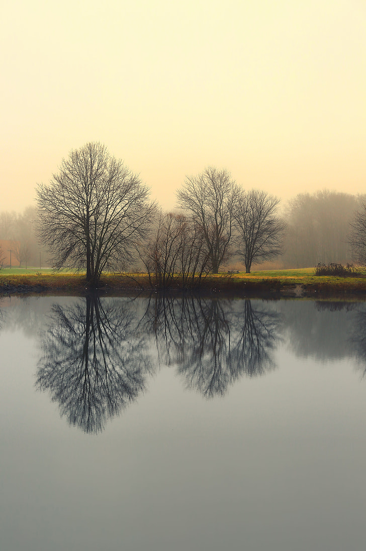Optical illusion photography of tree on body of water