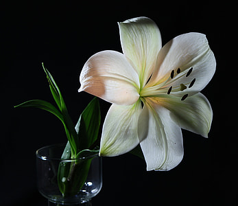 close up photograph of white petaled flower in clear glass vase