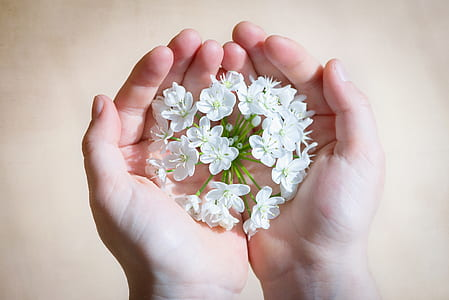 white cluster flower on person's hands