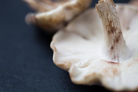 Macro shot of a fresh woodland mushroom
