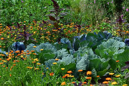 green lettuce on garden during daytime