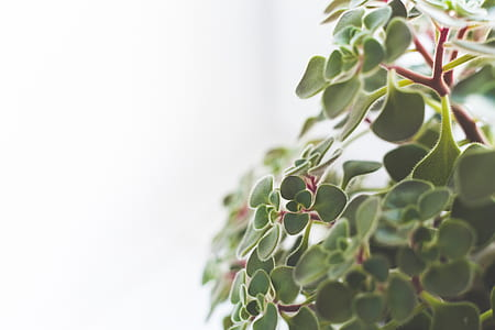 Close up of houseplant / copy space