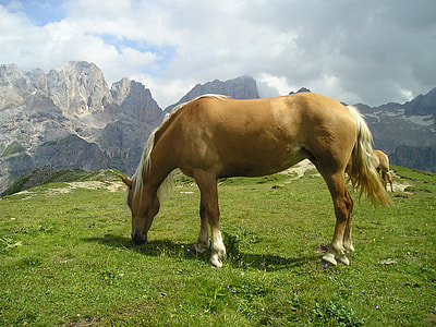 beige and white horse eating grass on hill near rock mountains
