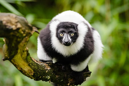 Black and White Animal on Top of Tree Branch during Daytime