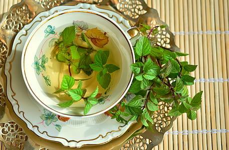 green leaf plant on bowl with liquid inside