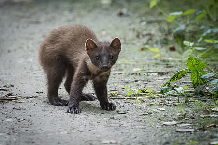 tilt shift photography of brown animal