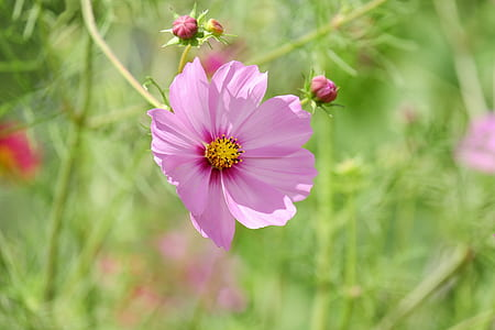 selective focus photography of pink petaled flower