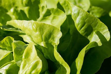 green leaf plant on focus photo