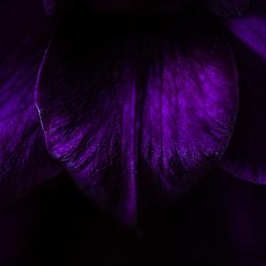 macro photography, purple, flower, petal, closeup, floral