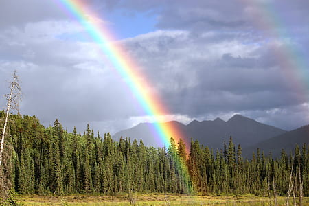 mountain with green trees and rainbow
