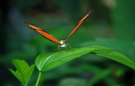 Orange and Black Butterfly on Green Leaf