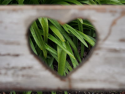 white heart-cutout wooden board